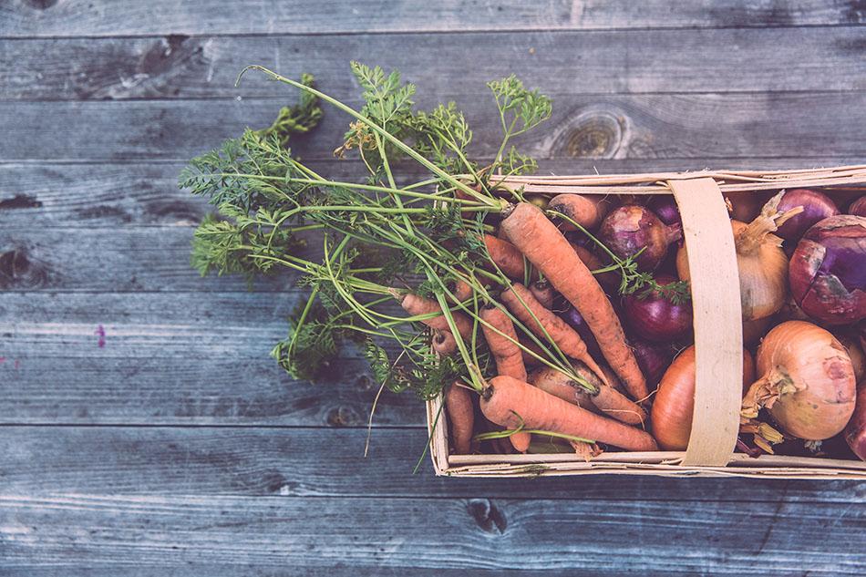 Récolte de légumes frais provenant d'un carré potager