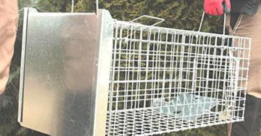 test complet Holtaz Super Fort Cage Piège De Capture